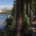 The trail follows Tenaya Lake's south shore connecting the lake's east and west end.- Tenaya Lake Trail