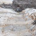 Layers of metamorphosed limestone on the Mosaic Canyon Trail.- Mosaic Canyon Trail