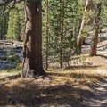 The trail parallels the Dana Fork of the Tuolumne River for a short stretch.- Lembert Dome Loop