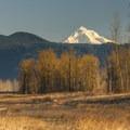 Steigerwald National Wildlife Refuge and Mount Hood (11,250').- Steigerwald Lake National Wildlife Refuge