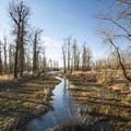 Gibbons Creek at Steigerwald National Wildlife Refuge.- Steigerwald Lake National Wildlife Refuge