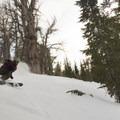 Skiing the trees of Waterhouse Peak.- Waterhouse Peak