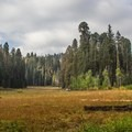 Crescent Meadow lies nestled among the ancient sequoia trees of the Giant Forest. Sequoia National Park.- Crescent Meadow