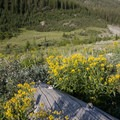 More wildflowers and views in the mid-canyon meadows.- North Fork of the Big Wood - West Fork of the North Fork