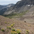 The scramble to the divide with the North Fork of the Big Wood is an exercise in patience up unstable scree slopes.- North Fork of the Big Wood - West Fork of the North Fork
