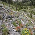 The route to Window Lake is a moderate off-trail climb up the south side of the West Fork of the North Fork Canyon. There are some great views early in the climb.- North Fork of the Big Wood - Window Lake