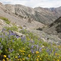 The treeline is around 9,600 feet where hikers will enter the upper alpine basins.- North Fork of the Big Wood
