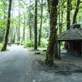 Picnic shelter at Elwha Campground.- Elwha Campground