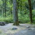 Typical campsite at Elwha Campground.- Elwha Campground