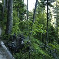 New growth forest along the Elwha River Trail.- Elwha River Trail, Goblin Gates + Humes Ranch Loop