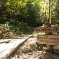Elwha River Trail turn off for Gobin Gates/Rica Canyon.- Elwha River Trail, Goblin Gates + Humes Ranch Loop