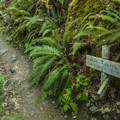 Geyser Valley Loop Trail.- Elwha River Trail, Goblin Gates + Humes Ranch Loop