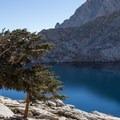 Foxtail pine (Pinus balfouriana), Columbine Lake.- Columbine Lake