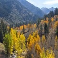 Quaking aspens (Populus tremuloides) showing off their fall colors in Mineral King Valley, Sequoia National Park.- Mineral King Valley