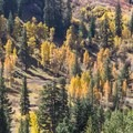 Resplendent fall colors in Mineral King Valley.- Mineral King Valley