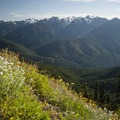 Wildflowers and views of the Elwha River Valley along the Hurricane Hill Trail.- Hurricane Hill Trail