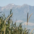 View of Mount Angeles (6,458') from Dungeness Spit.- Dungeness Spit