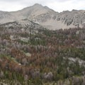 The forest in the upper basin of the Bellas Lakes drainage has been hit hard by a pine beetle epidemic.- Bellas Lakes