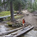 Balancing on a log across Bellas Creek.- Bellas Lakes