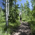 The lower portions of the Hyndman Creek Trail traverse through abundant aspen groves.- Hyndman Creek + Hyndman Basin Hike