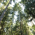 Second- and third-growth forest at Fort Townsend State Park.- Fort Townsend State Park Campground