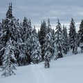 Snowy trees create a picturesque backdrop for a winter stroll.- Garfield Peak Snowshoe