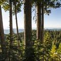 View along the Mount Ellinor upper trailhead trail.- Mount Ellinor via Upper Trailhead