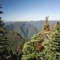 View west from the Mount Ellinor Trail.- Mount Ellinor via Upper Trailhead