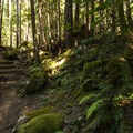 North Fork Skokomish Trail.- Skokomish River, Staircase Rapids Loop Trail