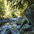 Staircase Rapids on the North Fork of the Skokomish River.- Skokomish River, Staircase Rapids Loop Trail