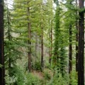 Heading back through the redwood forest.- Sykes Hot Springs