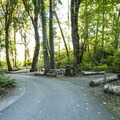 Potlatch State Park Campground South Loop.- Potlatch State Park Campground