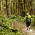 Hiker making his way through the Sams River Loop Trail alongside the Queets River.- Olympic National Park