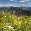 Wildflowers at Hurricane Ridge.- Olympic National Park