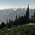 Mount Olympus (7,979'), the highest peak in Olympic National Park, is constanly in view to the south from the High Divide Trail.- Olympic National Park