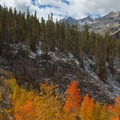 Fall foliage on the Bishop Pass Trail.- South Lake, Bishop Pass Trail