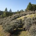 View along the Oregon Trail en route to Panorama Point.- Panorama Point via Oregon Trail