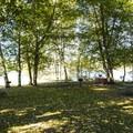 Picnic area at Alder Lake Park.- Alder Lake Park