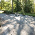 Typical campsite at Alder Lake Park Campground's Main Campground.- Alder Lake Park
