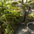 Potable water source at Alder Park Osprey Campground.- Alder Lake Park Campground