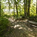 Picnic area at Sunny Beach Point.- Alder Lake, Sunny Beach Point