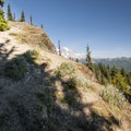 High Rock Lookout Tower Trail.- High Rock Lookout Tower Hike