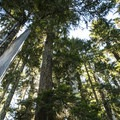 Old-growth forest en route to Pothole, Bertha May, and Granite Lakes.- Granite, Bertha May + Pothole Lakes