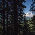 View through the woods toward Mount Rainier (14,411') from Granite Lake.- Granite, Bertha May + Pothole Lakes