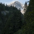View of Mount Rainier's Point Success (14,158') from Van Trump Creek Canyon.- Comet Falls Hike