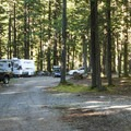 Small campsite on a loop off of NF-7160.- Buck Creek Campsites at Ranger Creek Airstrip