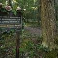 Memorial sign on a campsite loop off of NF-7160.- Buck Creek Campsites at Ranger Creek Airstrip
