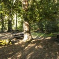 Day use picnic area at The Dalles Campground.- The Dalles Campground