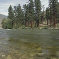 Majestic ponderosa trees line the banks of the Middle Canyon.- Middle Fork of the Salmon River - Overview