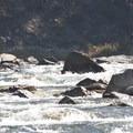 A kayaker navigates the boulder garden of Sulphur Slide in October.- Middle Fork of the Salmon River - Day 1
